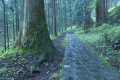 Nikko pathway. Stone pathway in scenic cedar forest in Nikko, Japan Stock Photos