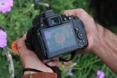 Nikon D5300 klikt Dani-fotografie stock afbeeldingen