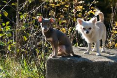 Little dogs on stone. Two little dogs of different races on a stone on a sunny day stock photo