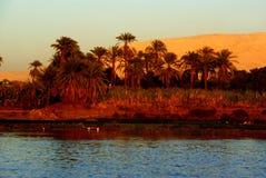 Nil brzeg z daktylowymi palmami w czerwonym wieczór świetle fotografia royalty free