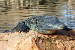 Nil-Krokodil Stockfotos
