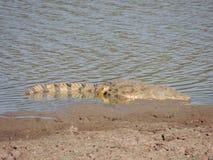 Nil-Krokodil Stockfotografie