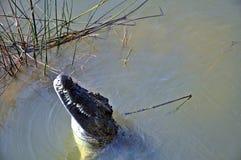 Nil krokodyl Obraz Stock