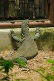 Nil monitor jest wielkim jaszczurki gadem w Afryka obraz royalty free