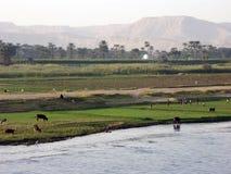 Nil-Ufer Stockbild