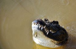 Nile Crocodile Photographie stock