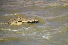 Nile crocodile in Botswana Royalty Free Stock Photo