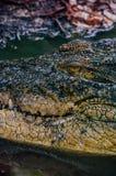 Nile crocodile Crocodylus niloticus, close-up detail of teeth of the crocodile with open eye. Crocodile head close up in nature of Stock Photo