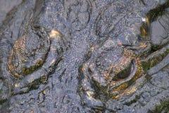 Nile crocodile (Crocodylus niloticus). Close-up of Nile crocodile (Crocodylus niloticus)  in the water at biyamiti weir in Kruger National Park, South Africa Stock Images