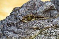Nile Crocodile Eye Stock Images
