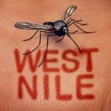 Nile Disease ocidental ilustração stock