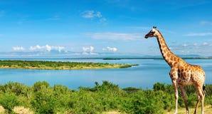 nile flod uganda Arkivbild