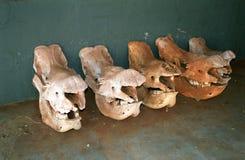 Nile hippo skulls, Hlane Royal National Park, Swaziland Stock Image