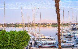 The Nile in the morning royalty free stock photo