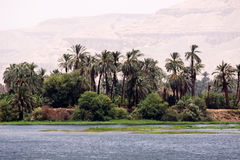 Nile nature Stock Image