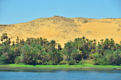 Nile river. Bank of Nile river in Egypt royalty free stock photography
