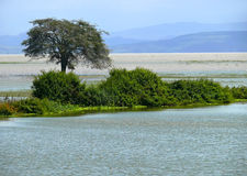 The Nile River closeup. Island overgrown with greenery and trees royalty free stock photo