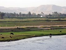 Nile shore. Along the Nile river, Egypt Stock Image