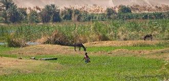 Nile shore Stock Photo