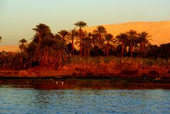 Nile shore with date palms in red evening light royalty free stock photography