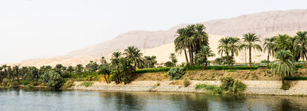 Nile shore in nature Royalty Free Stock Image