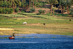 Nile shore panorama Stock Image