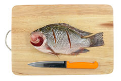 Nile Tilapia on chopping block Royalty Free Stock Photo
