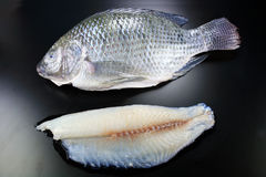 Nile tilapia fillet Stock Images
