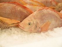 Nile tilapia fish Stock Photo