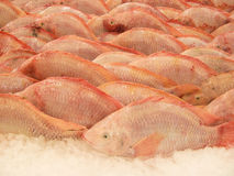 Nile tilapia fish Royalty Free Stock Image