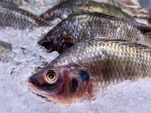 Nile Tilapia Fish fraîche dans la pile de la glace Images libres de droits