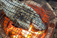 Nile Tilapia Fish grilled Stock Photography