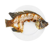 Nile tilapia fishbone Royalty Free Stock Photo