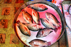 Nile tilapia Royalty Free Stock Photography
