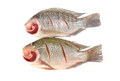 Nile Tilapia on a white background Stock Photo