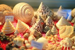 Nile top shell Royalty Free Stock Photography