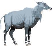 Nilgai вектора мужской - голубой бык иллюстрация вектора