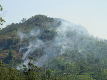 Nilgiri forestfire Stock Photography