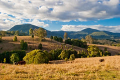 Nimbin, Australia, rural landscape. Panorama Royalty Free Stock Images