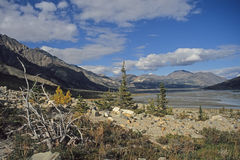 Nimmt River Valley, Yukon ab Stockbilder