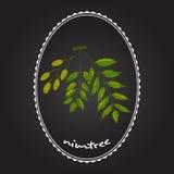 Nimtree medicinalväxt Royaltyfri Illustrationer