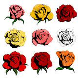 Nine color roses Royalty Free Stock Photo
