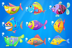Nine colorful fishes under the sea Royalty Free Stock Image