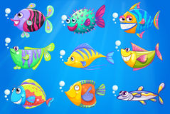 Nine colorful fishes under the sea Stock Photography