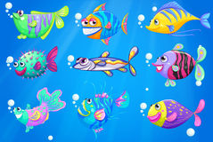 Nine colorful fishes under the sea Stock Photos