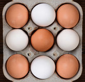 Nine Eggs in a Cardboard Carton Stock Image