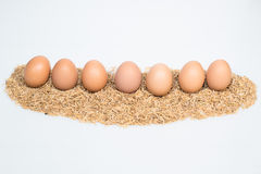 Nine eggs with husk Royalty Free Stock Photography