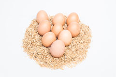 Nine eggs with husk Stock Image