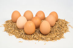 Nine eggs with husk Stock Photo