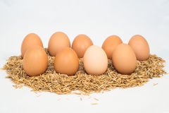 Nine eggs with husk Stock Photos
